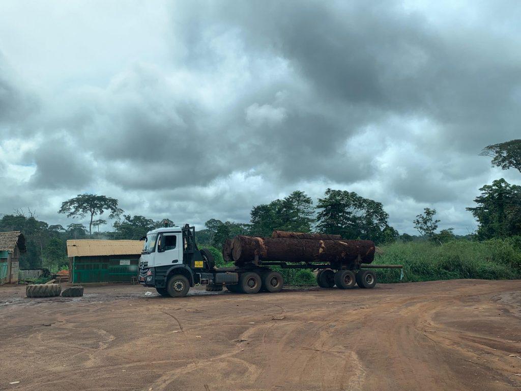 Nach Amazonas - verstärkte Abholzung im Kongo-Becken